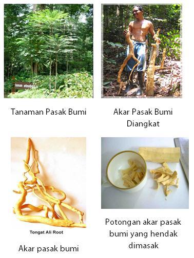 sumber gambar dari blog Obat Tradisional Indonesia (blogspot)