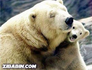beruang1